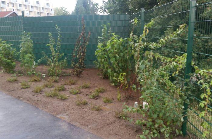 Neubepflanzung einer Freifläche